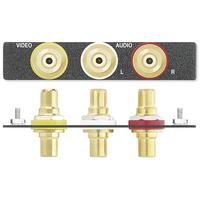 Extron Three RCA Female to Female Barrels Dop aansluitdoos - Zwart, Goud